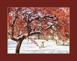 December garden - 2005