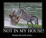 Demotivational: zebra