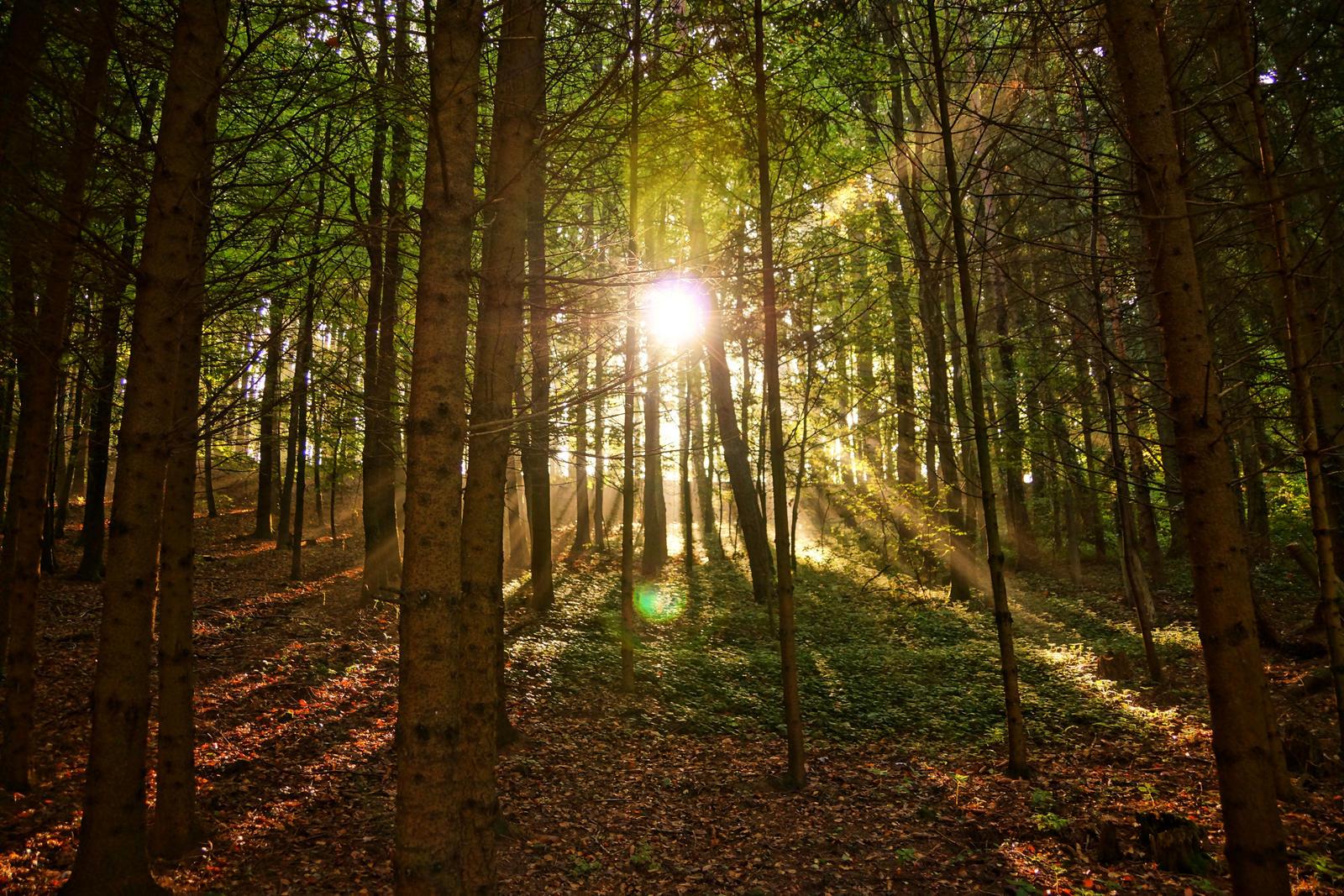 autumn forest by Mittelfranke