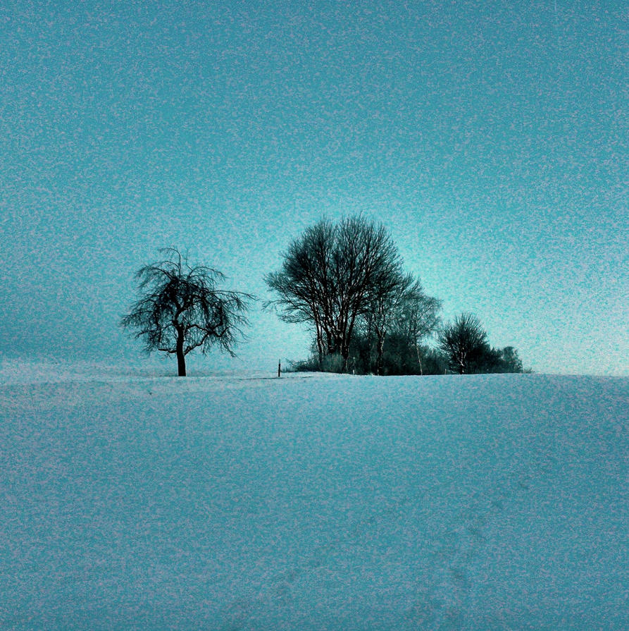 winter trees by Mittelfranke