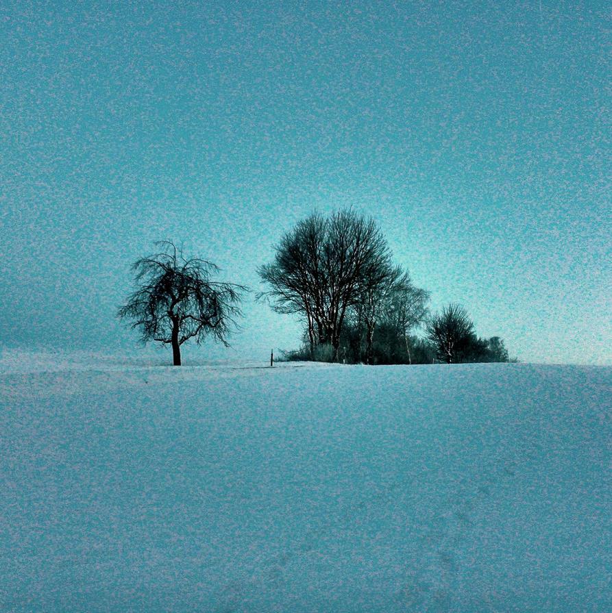 winter trees by Mittelfranke