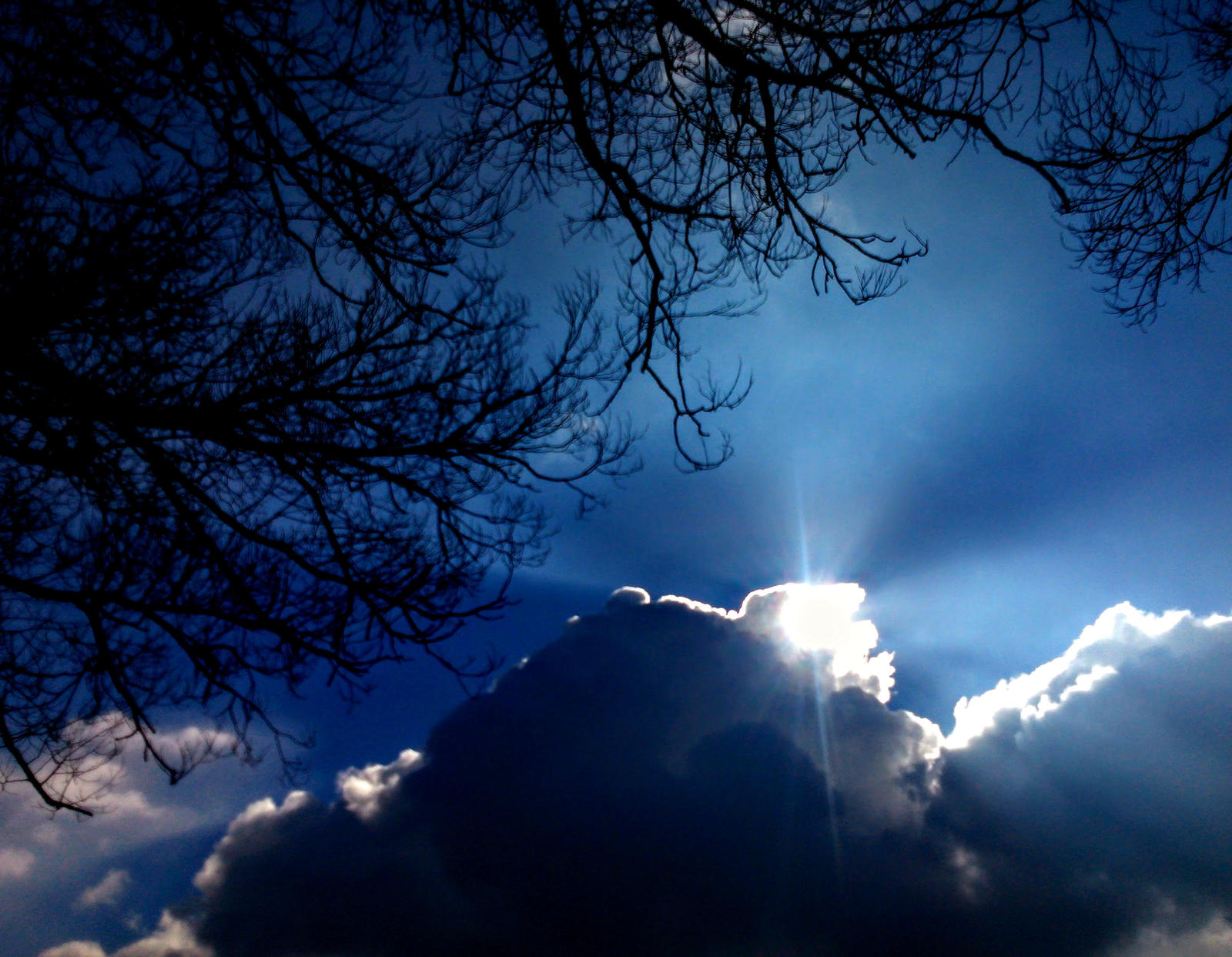 sky and tree by Mittelfranke