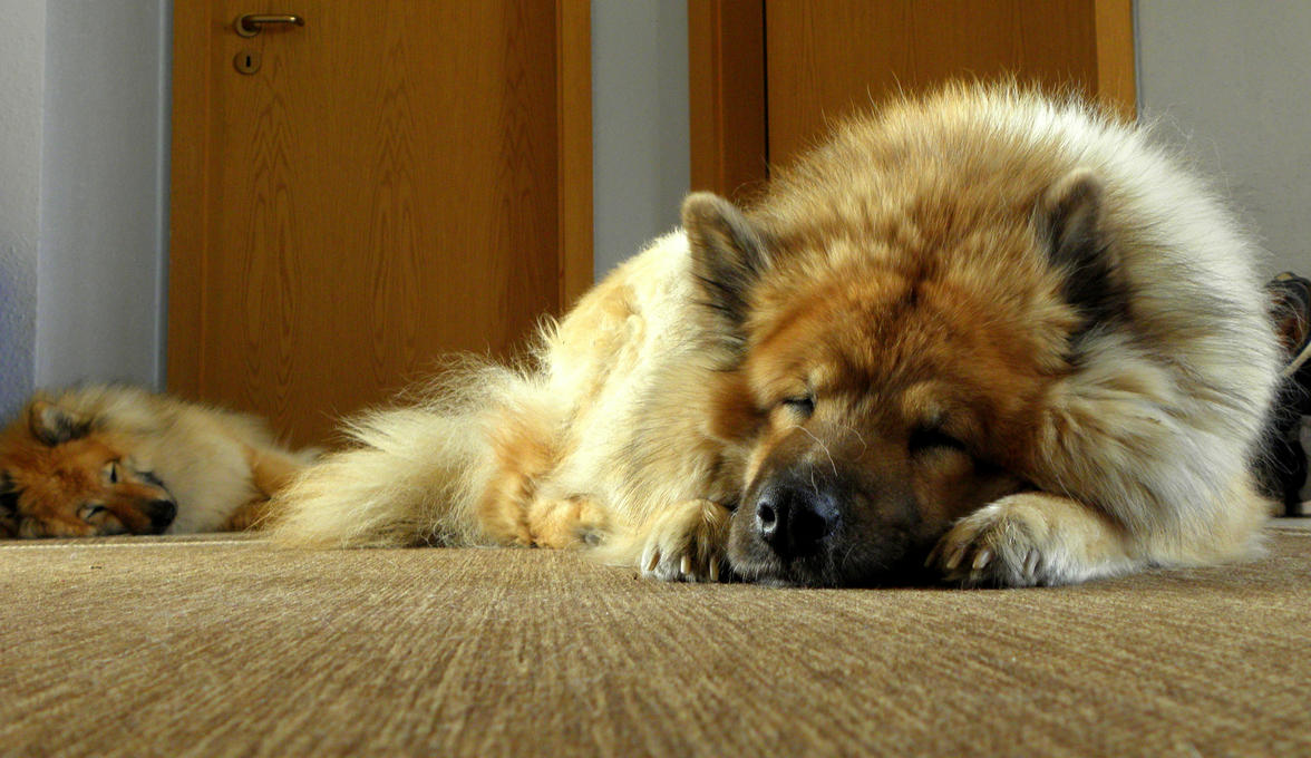 sleeping dogs by Mittelfranke