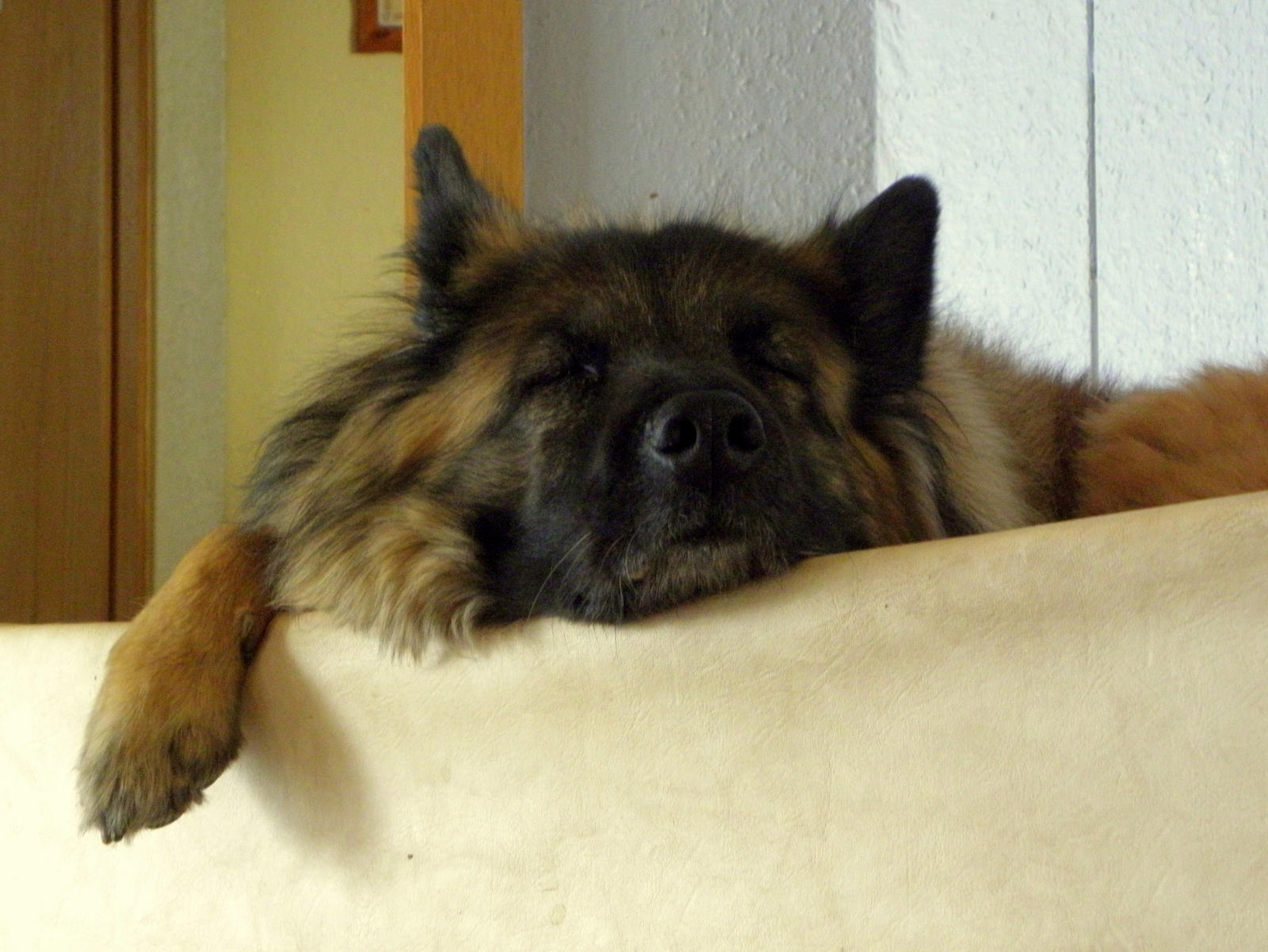 another sleeping dog by Mittelfranke