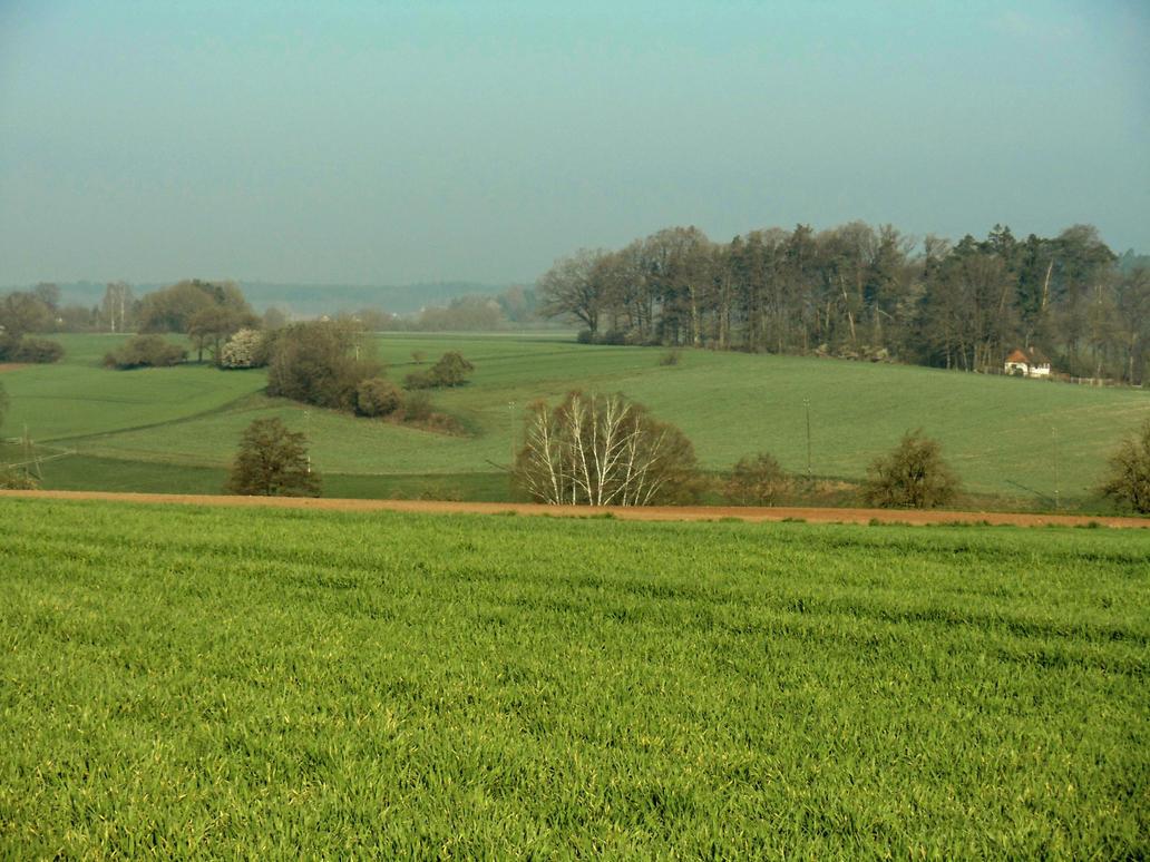 spring morning by Mittelfranke