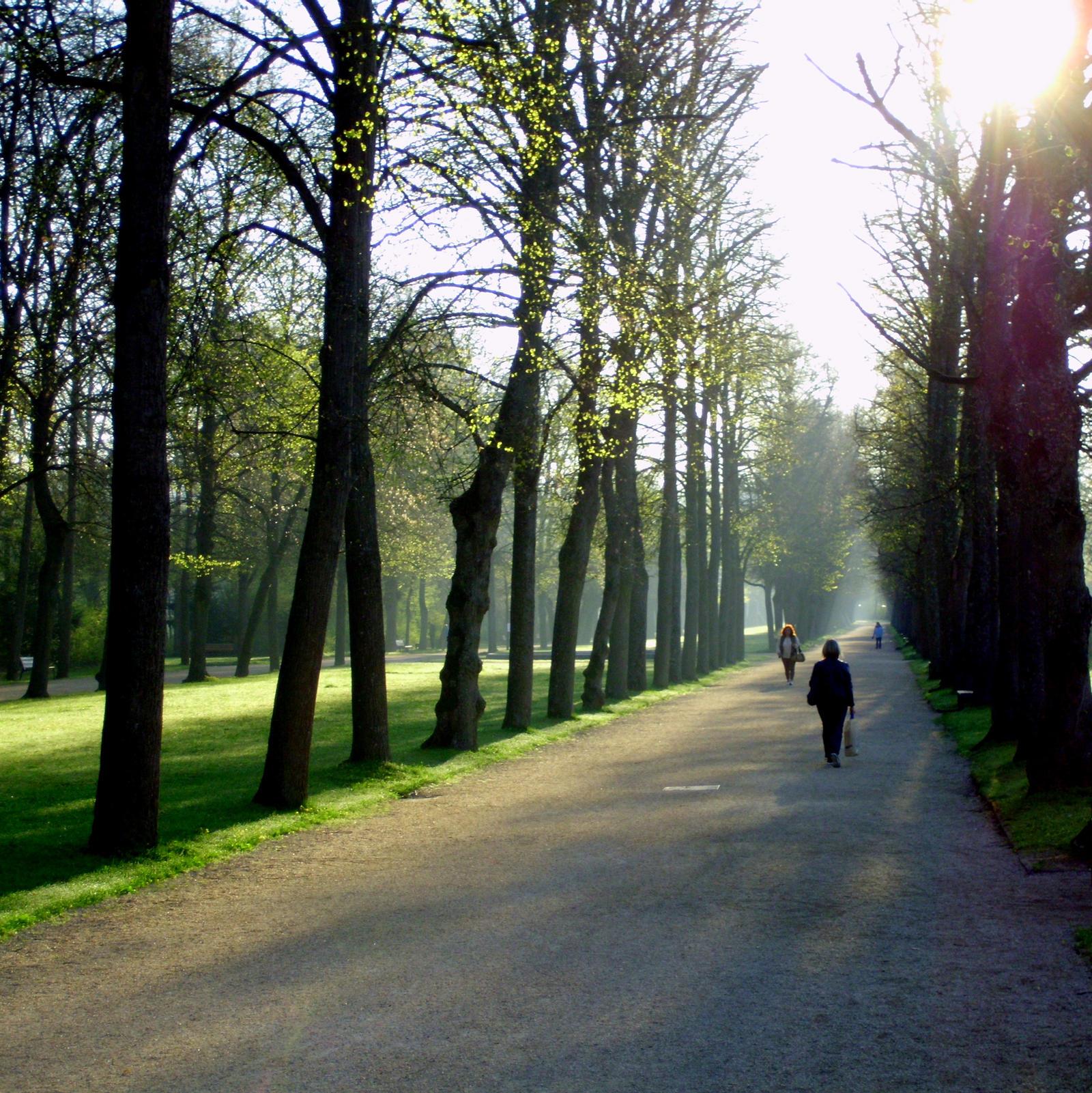 early in the parc by Mittelfranke