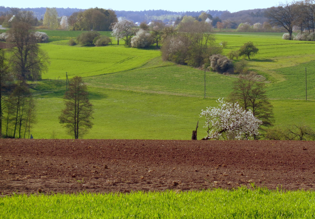 Green springtime by Mittelfranke