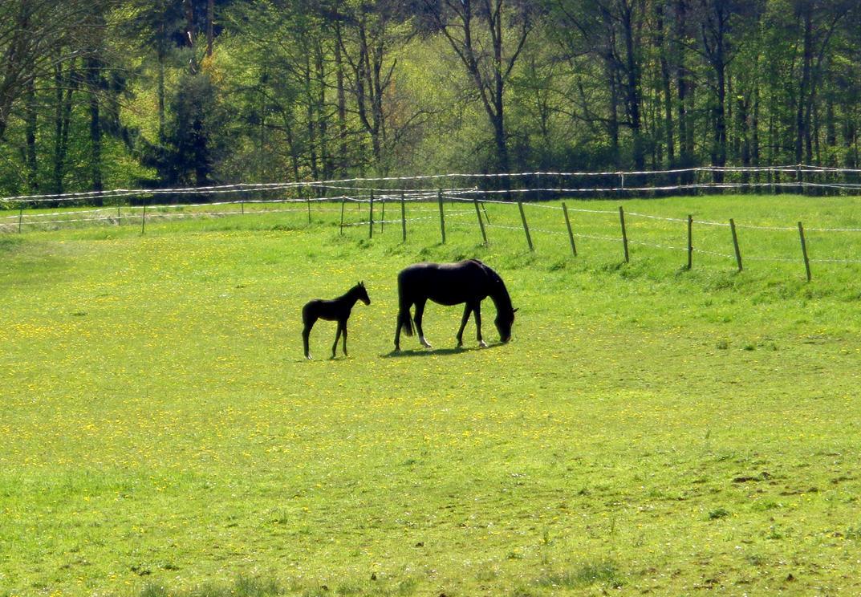 pasture by Mittelfranke