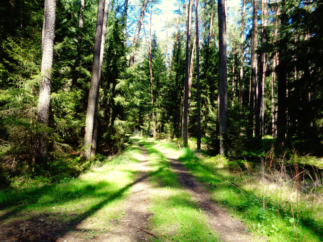 forestpath by Mittelfranke
