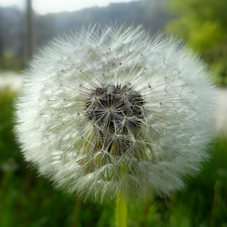 blowball by Mittelfranke