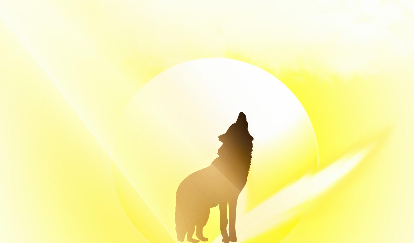 wolf at sunset by Mittelfranke