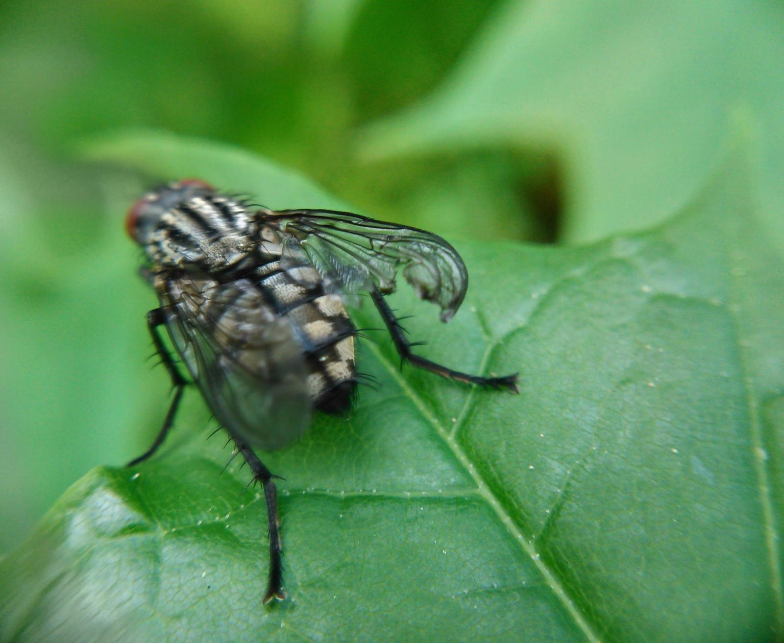 fly by Mittelfranke