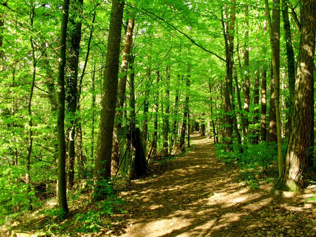 green spring by Mittelfranke