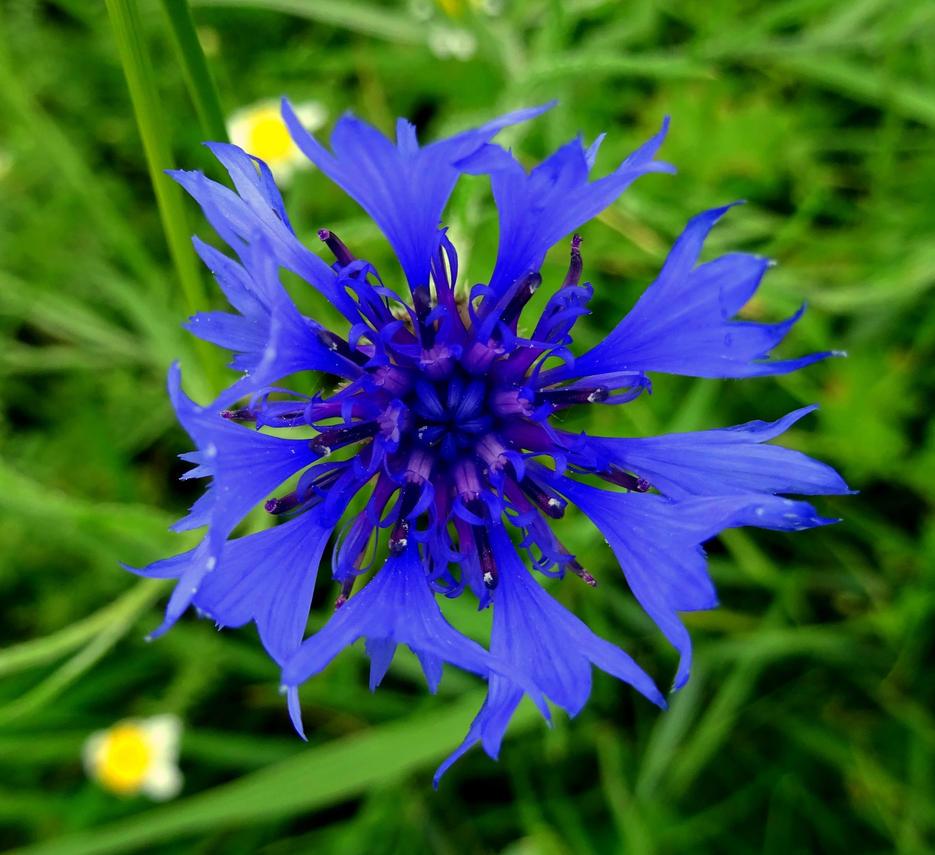 blue by Mittelfranke