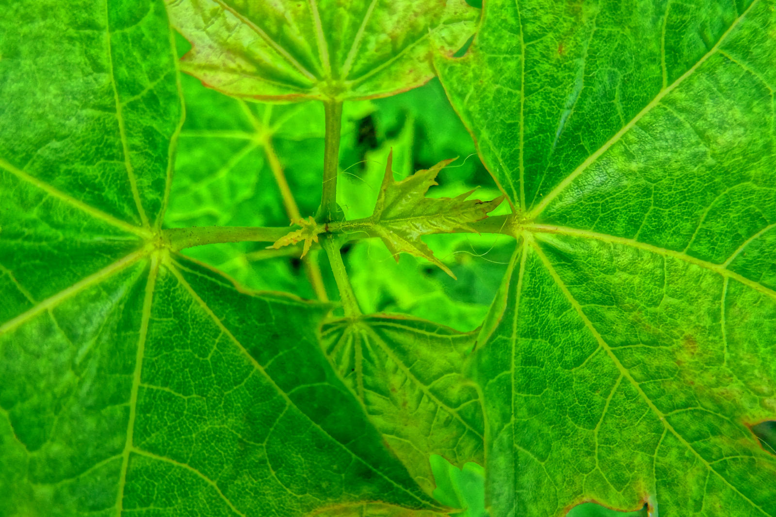 leaves by Mittelfranke