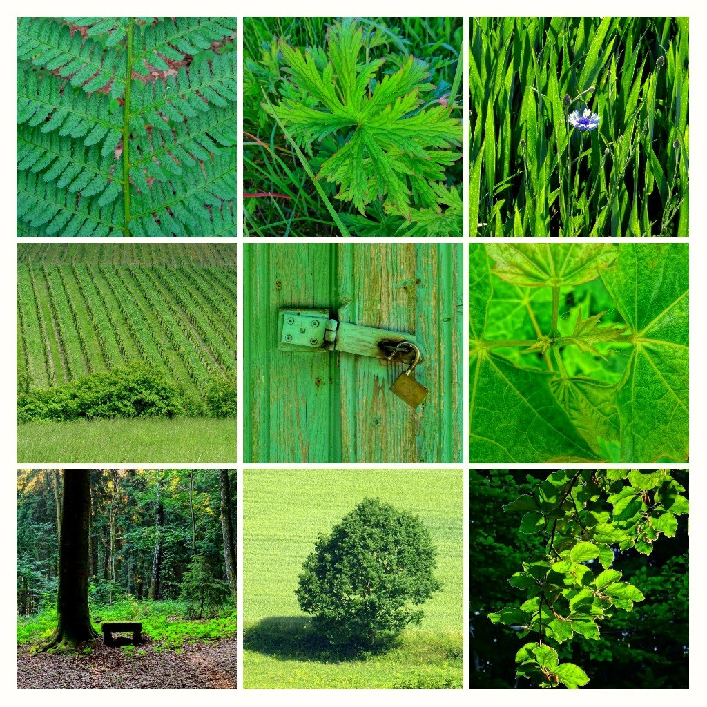 all things green by Mittelfranke