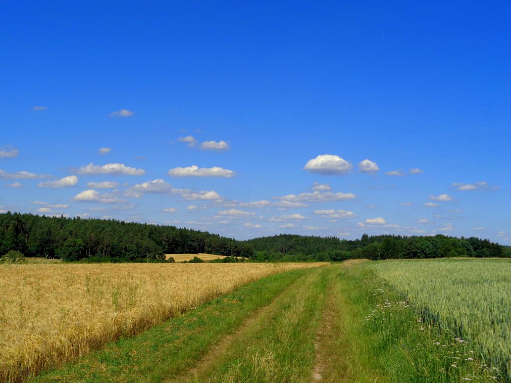 summertime path by Mittelfranke