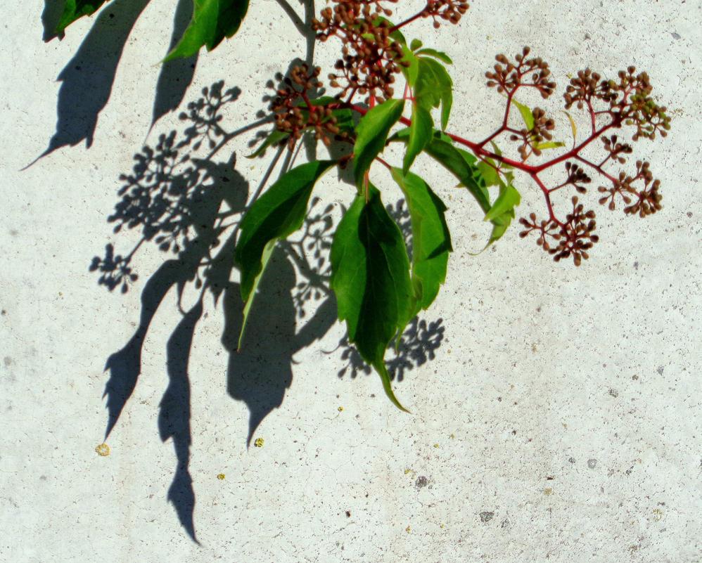 shadow by Mittelfranke