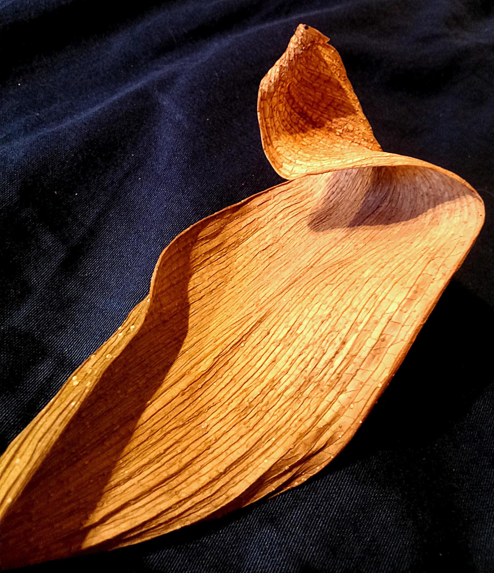 dry leaf by Mittelfranke