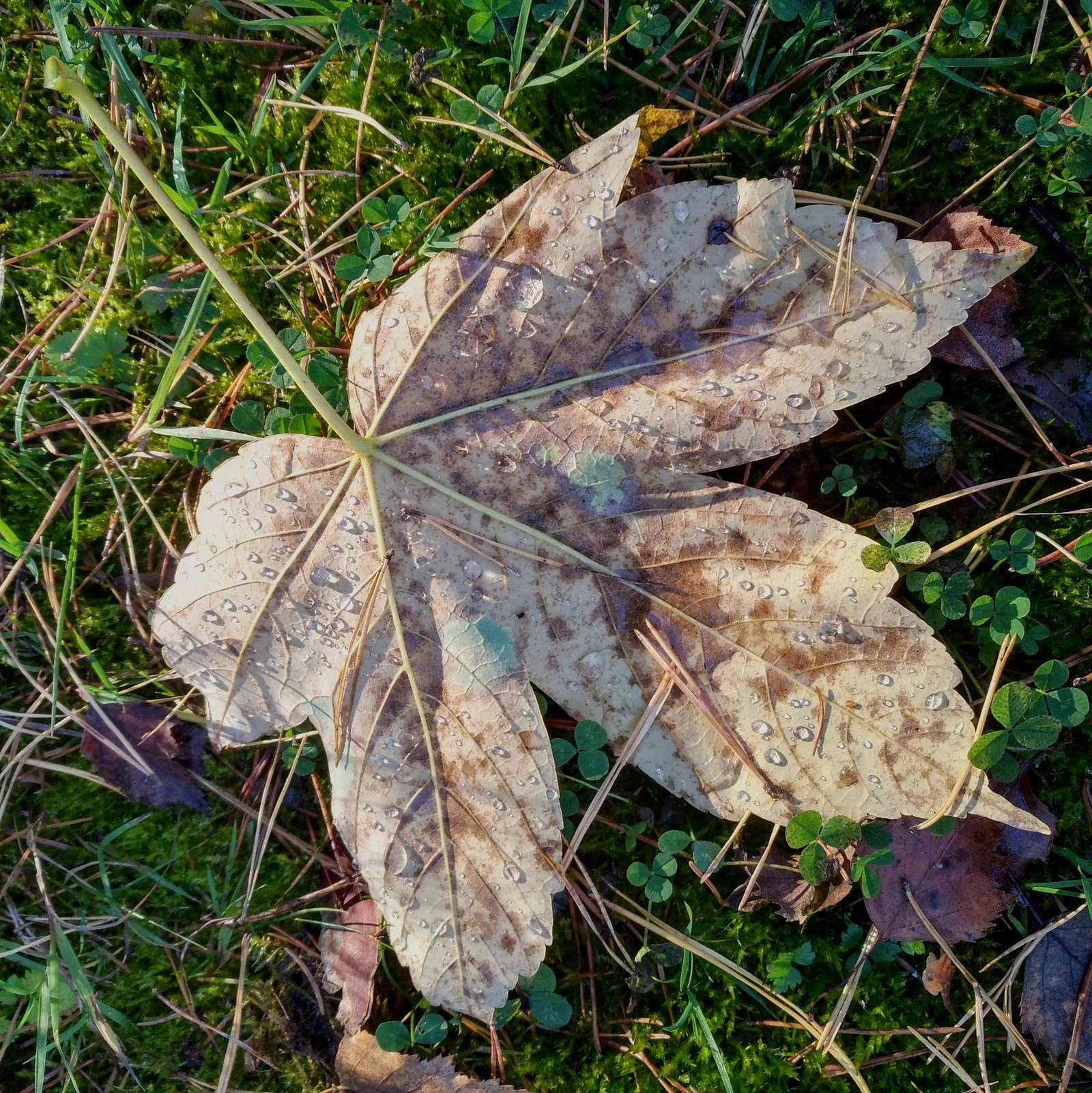 fallen of fall by Mittelfranke
