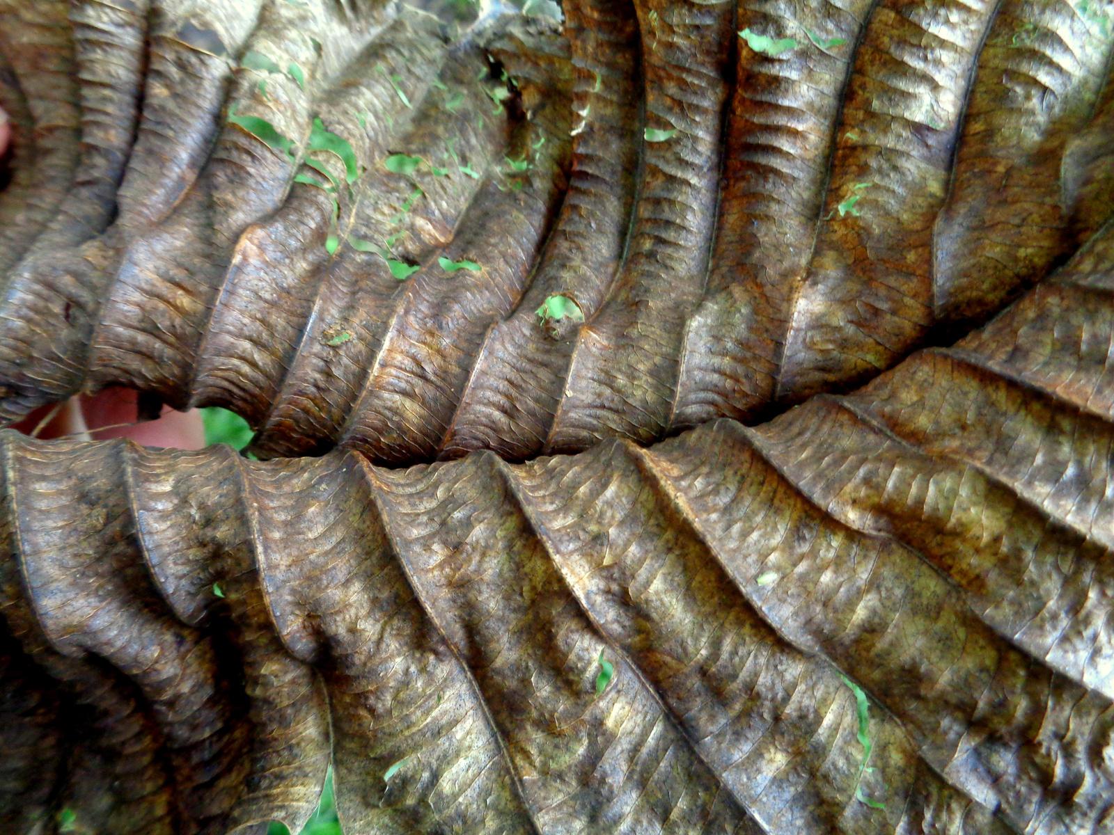 dead leaf by Mittelfranke