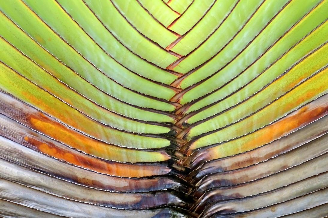 palm leaf by Mittelfranke