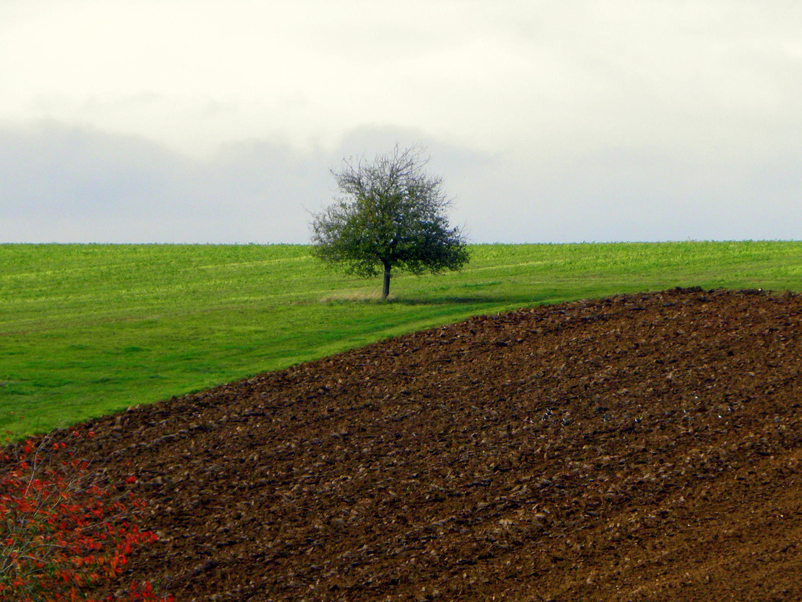 field and tree by Mittelfranke