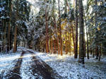 winter forest #2