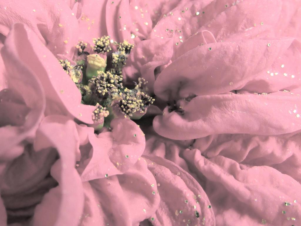 Light Pink Christmas Flower by elfgirl12