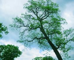 Tree-be-do-dah-day.