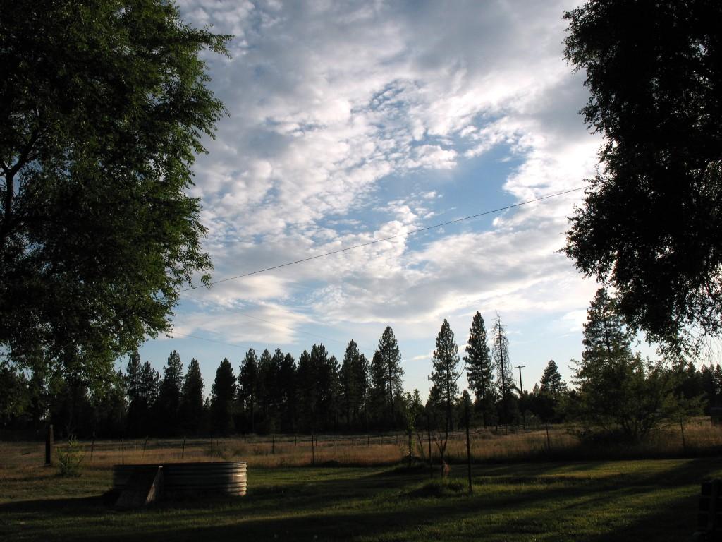 Between The Trees By Tweaka On Deviantart