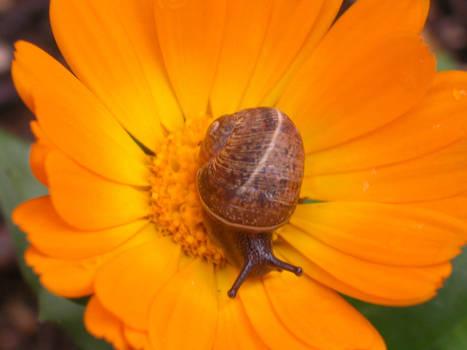 snail__  1__