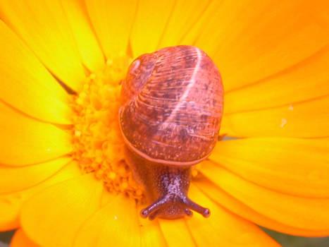snail__ 2__