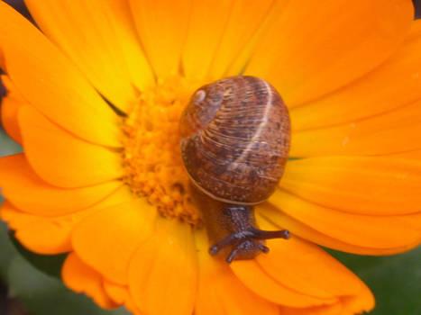 snail__ 3__