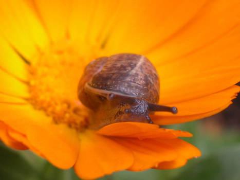 snail__ 4__