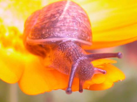 snail__ 5__