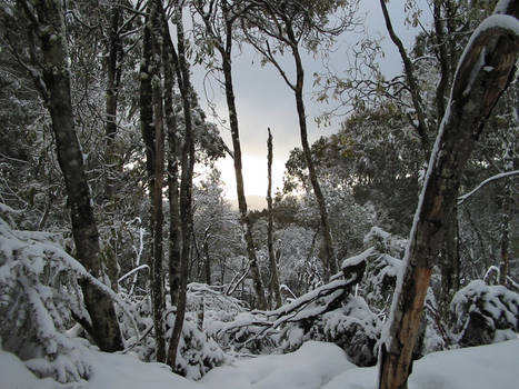 snow sunset__