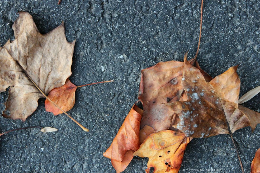 Fallen Leaves by softmist93