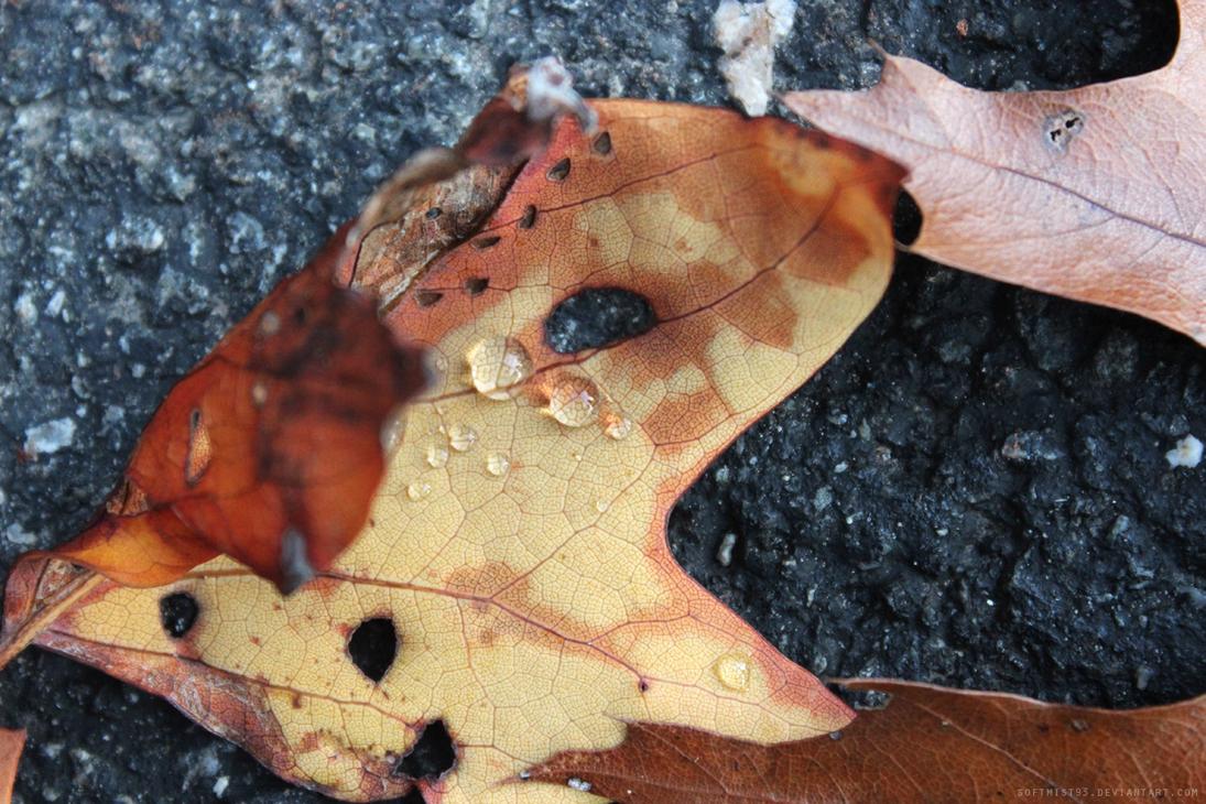 Fallen Leaves 2 by softmist93