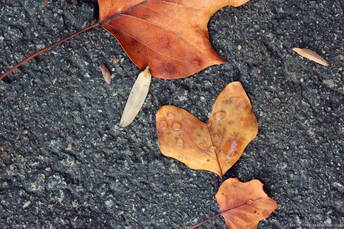 Fallen Leaves 3 by softmist93