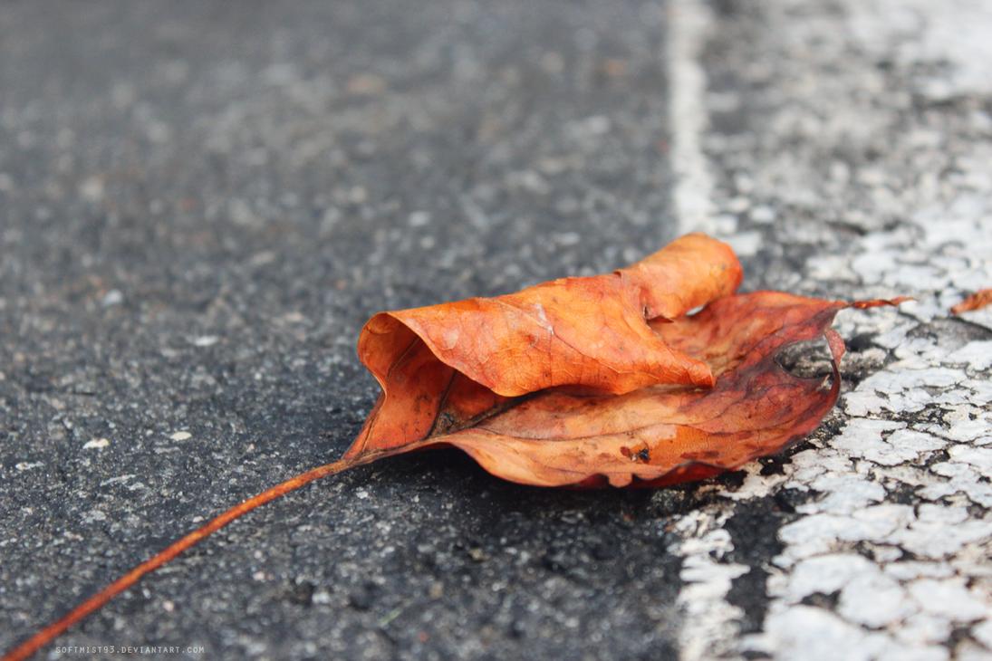 Fallen Leaves 4 by softmist93