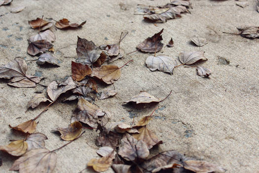 Leaf Stains 4