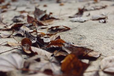 Leaf Stains 5