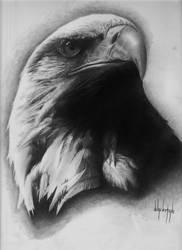 Bald Eagle by 814CK5T4R