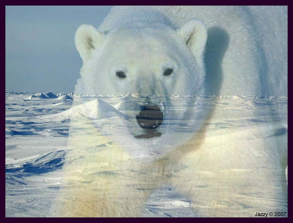 Polar Delight by jazzywitch
