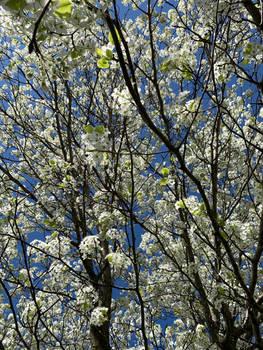 Springtime dreaming