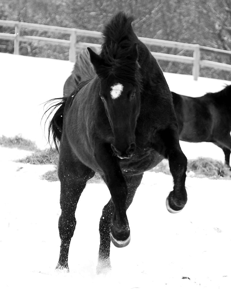 Snow Run by guardianhorse