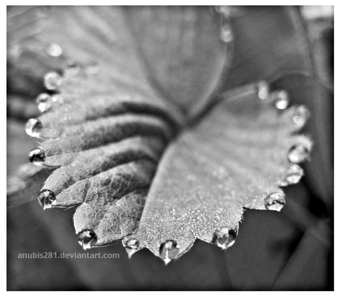 Raining Tears 2349 by anubis281