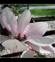 Magnolia Summer 2635 by anubis281