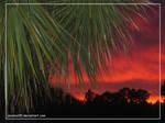 Sunset Palm 5602